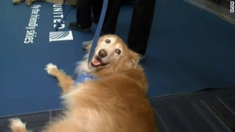 cnnee vo rec dogs at the airport to take the stress_00001025