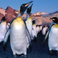 1. adventure travel antarctica