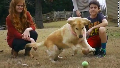 turkey dogs golden retriever sidner dnt_00013205.jpg