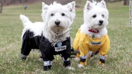 dogs in pants moos pkg_00010929