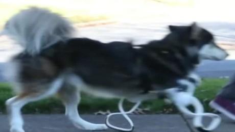 cnnee dusa vo dog 3d prosthetics_00000723