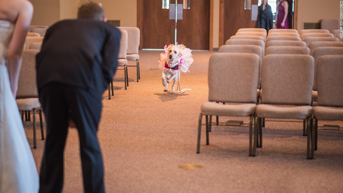 Dressed in a pink tutu, the pooch also served as the couple's flower girl. Bella helps Valerie Parrott deal with anxiety and possible panic attacks.