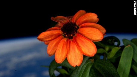 Is this the first ever flower grown in space?