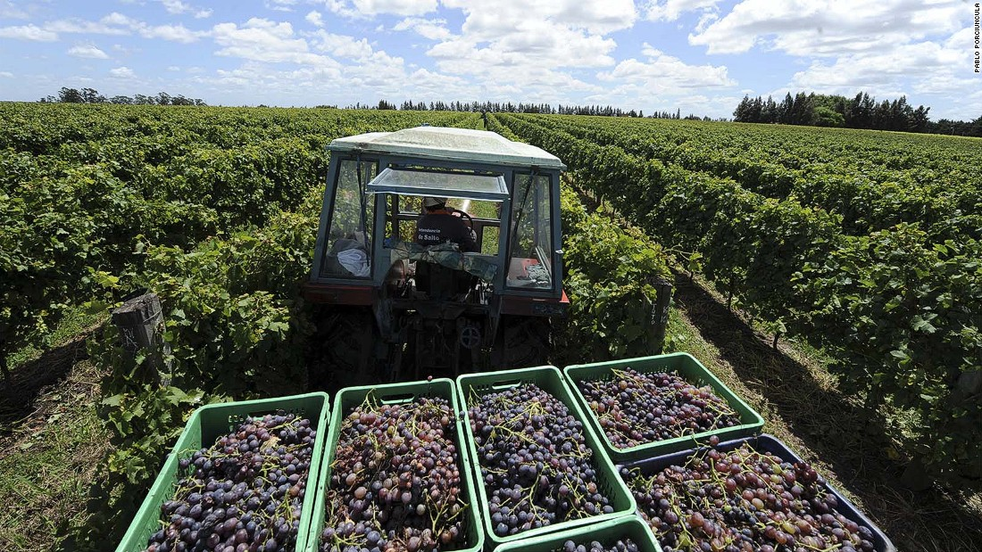 Uruguay is South America's fourth largest wine producer, with the majority of its vineyards and wineries located in the hills north of Montevideo.