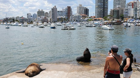 """TO GO WITH AFP STORY  Tourists take pictures of sea lions, permanent """"residents"""" at the marina of Punta del Este, one of the most exclusive seaside resorts of Latin America, 140 km from Montevideo, on January 17, 2009. Every Austral summer tourists from Argentina, Brazil and also from Europe invade Punta del Este to enjoy the Atlantic coast and to consume imported luxury goods, as jewellery, hi-tech products and brand clothes. AFP PHOTO/Daniel Caselli (Photo credit should read DANIEL CASELLI/AFP/Getty Images)"""