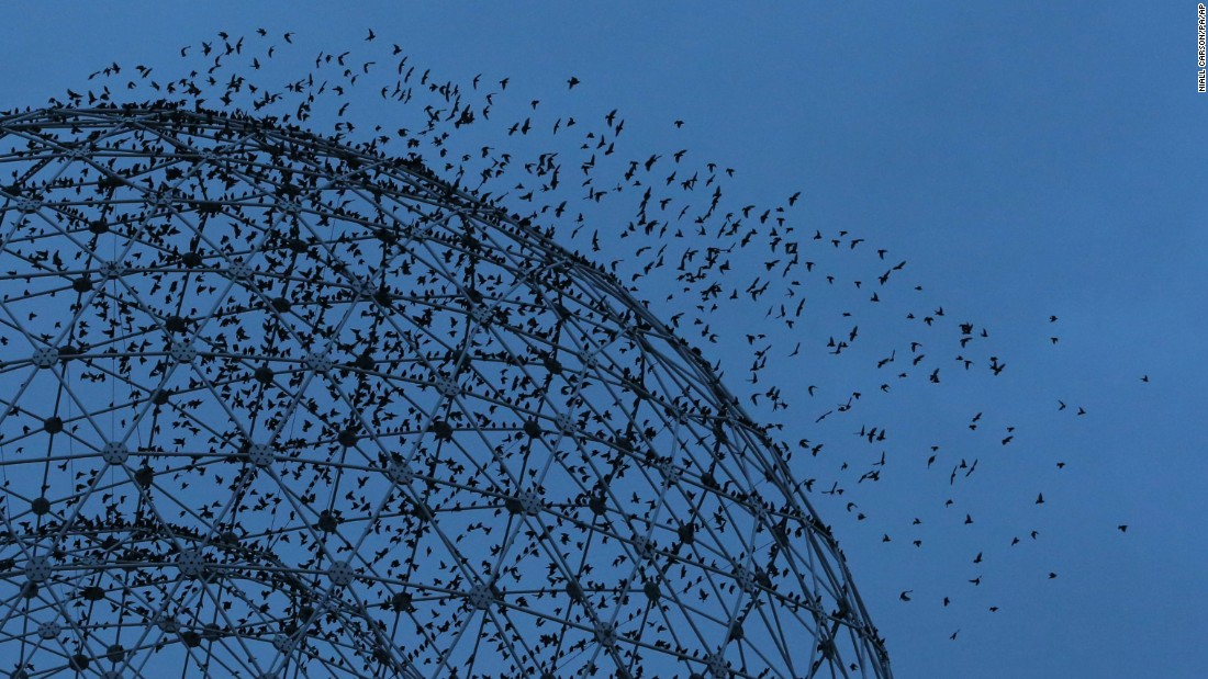 "Starlings fly around ""Rise,"" a metal sculpture by UK-based artist Wolfgang Buttress. The sculpture has stood on the Broadway roundabout in Belfast since 2011."