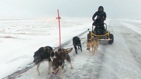 Dog sledding in the Arctic Circle