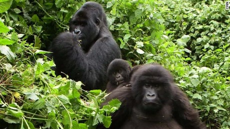 africa virunga volcano tour damon backstory pkg_00014230.jpg