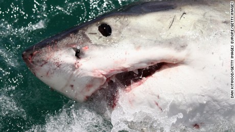 2015 sets new shark attack record