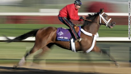 Louisville, UNITED STATES:  Breeders' Cup hopeful Invasor, bred in Argentina trains 02 November, 2006 during morning workouts for the Breeders' Cup Classic horse race at Churchill Downs in Louisville, Kentucky. The eight race 20 million USD prize money races will be held on 04 November, 2006.    AFP PHOTO/JEFF HAYNES  (Photo credit should read JEFF HAYNES/AFP/Getty Images)