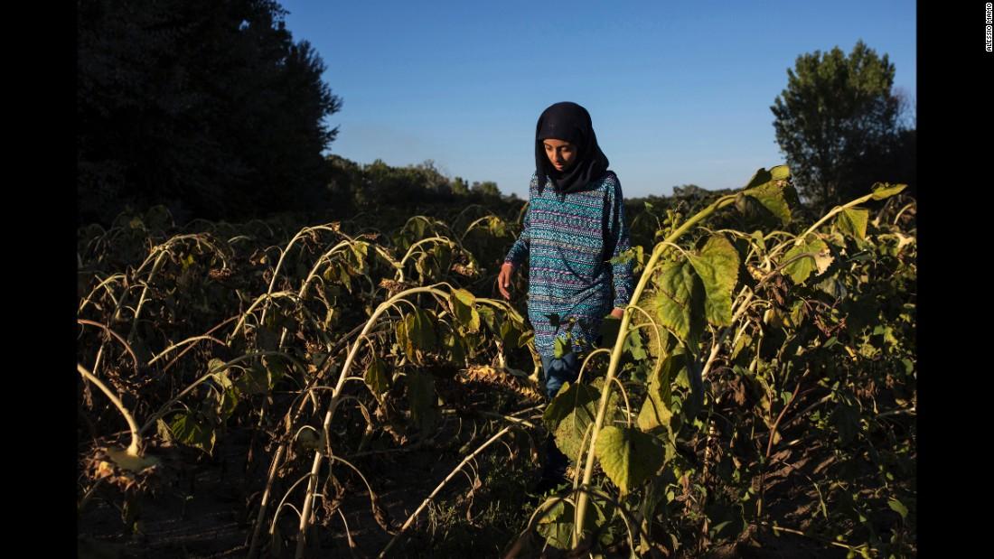 Lubna, Somar's 14-year-old sister, walks in a field of sunflowers in Edirne, Turkey.