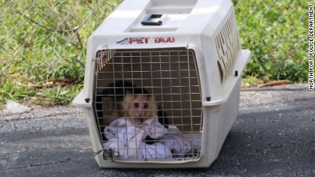 Monkeys were found in crates in a Florida motel room with a woman's body, authorities said.