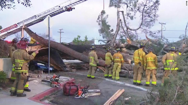 driver killed when tree falls on car kfmb dnt_00010725
