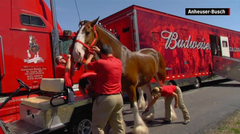 Budweiser Clydesdales training farm origncc_00003122