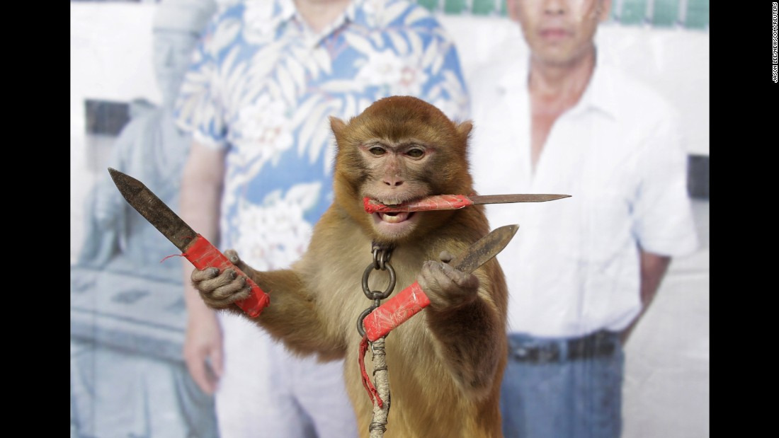 A monkey catches knives during a daily training session at a monkey farm in Baowan, China, on Tuesday, February 2. Villagers say they've been breeding and training monkeys for centuries.<br />