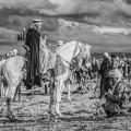 fantasia horse festival kneel