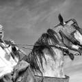 fantasia horse festival arch