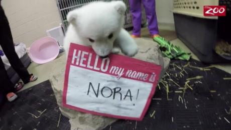 cnnee vo oso polar bebe ya tiene nombre _00001420