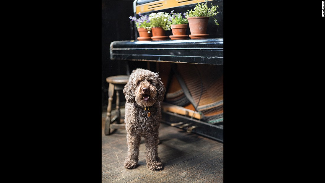 "Alfie actually likes cats -- but they're not fond of him. He hangs out at <a href=""http://www.rosemarybranch.com/index.php/the-bar"" target=""_blank"">The Rosemary Branch</a> in Islington and his owners claim he can count to five."