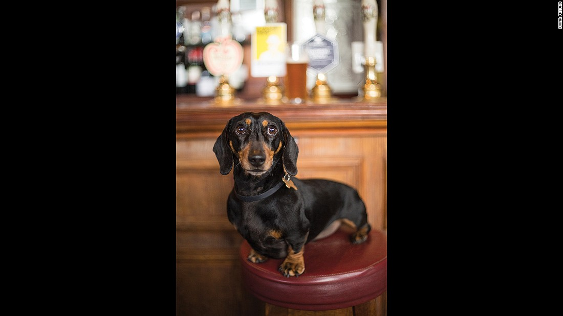 "Lenny's nemesis is the postman -- and he's not keen on anyone who comes between him and a juicy lamb bone. He likes to lap at gravy or India Pale Ale while in <a href=""http://thebullandlast.co.uk"" target=""_blank"">The Bull and Last</a> near Hampstead Heath."