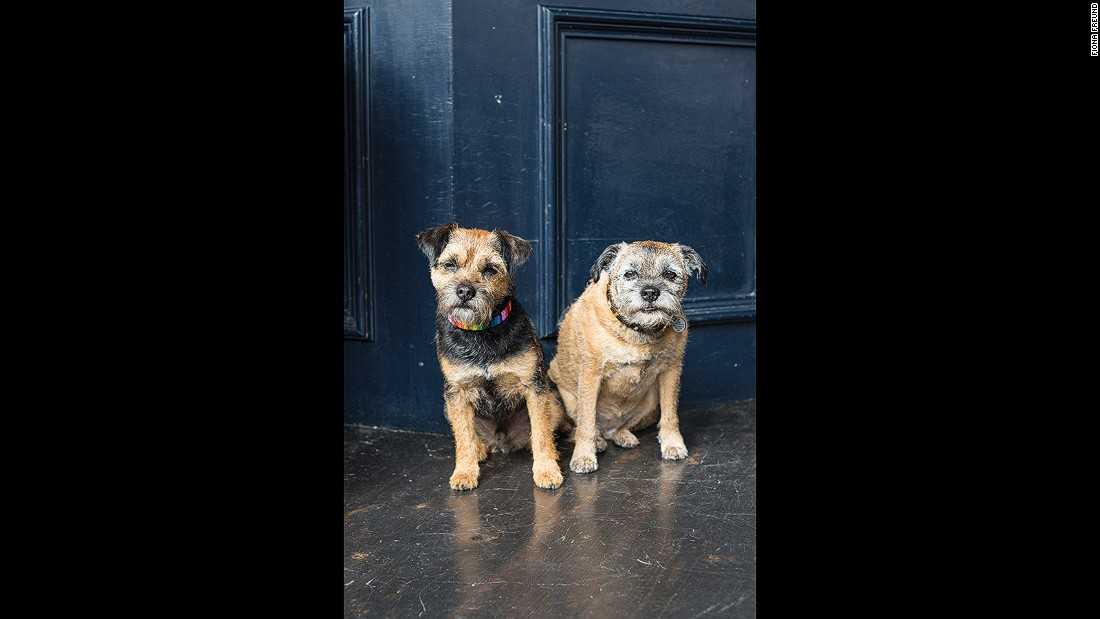 Also regulars at The Lansdowne, Molly and George aren't fond of Spaniels, rain and scooters. They enjoy chasing squirrels.