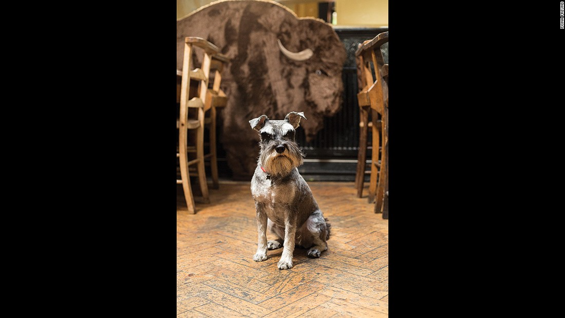 "Ricci, a denizen of <a href=""http://www.rosemarybranch.com/index.php/the-bar"" target=""_blank"">The Rosemary Branch</a> in Islington, loves liver treats and walks on the beach, and is mistrustful of cats and noisy children."