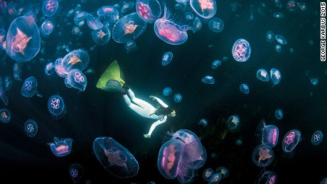 [PICTURE: UNDER EXPOSED OPOTY CATEGORY WINNER-GEORGE KARBUS.JPG] UNDER EXPOSED -- WINNER George Karbus (Czech Republic) After 11 years of freediving in Irish waters I have seen many types of beautiful jellyfish, but the summer last year was exceptionally warm and sunny and the ocean was a different place. There were amazing runs of moon and compass jellyfish. My girlfriend and I were on a freedive session when we discovered these amazing clouds of moon jellyfish. We immediately began swimming among them, enjoying the pulsing as they propelled themselves along.  Nikon D4 with Nikkor 16mm fisheye lens, ISO 1400, 1/500sec at f/11, Subal housing georgekarbusphotography.com