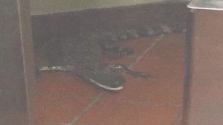man throws alligator in wendy's wptv dnt_00004611