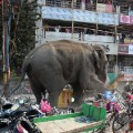 02 wild elephant 0210