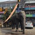 05 wild elephant 0210