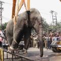 06 wild elephant 0210