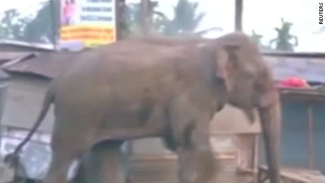 Elephant rampages through Indian neighborhood