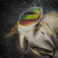 06_cnnphotos_bugs_RESTRICTED