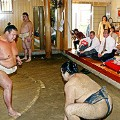 sumo stables