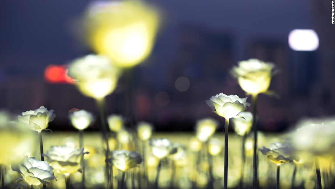 The most romantic garden? 25,000 light roses illuminate Hong Kong