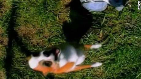 Hillary Clinton barking donald trump moos pkg erin_00010903