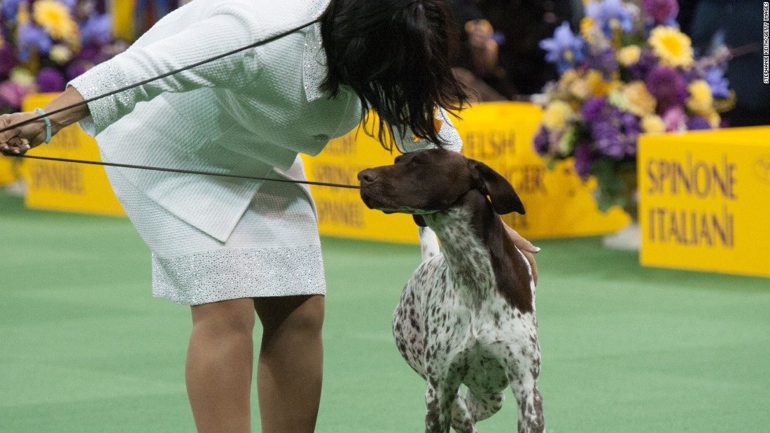 Westminster Dog Show  Tv
