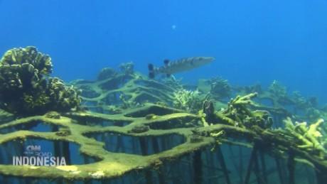 indonesia coral reef otr spc_00030801