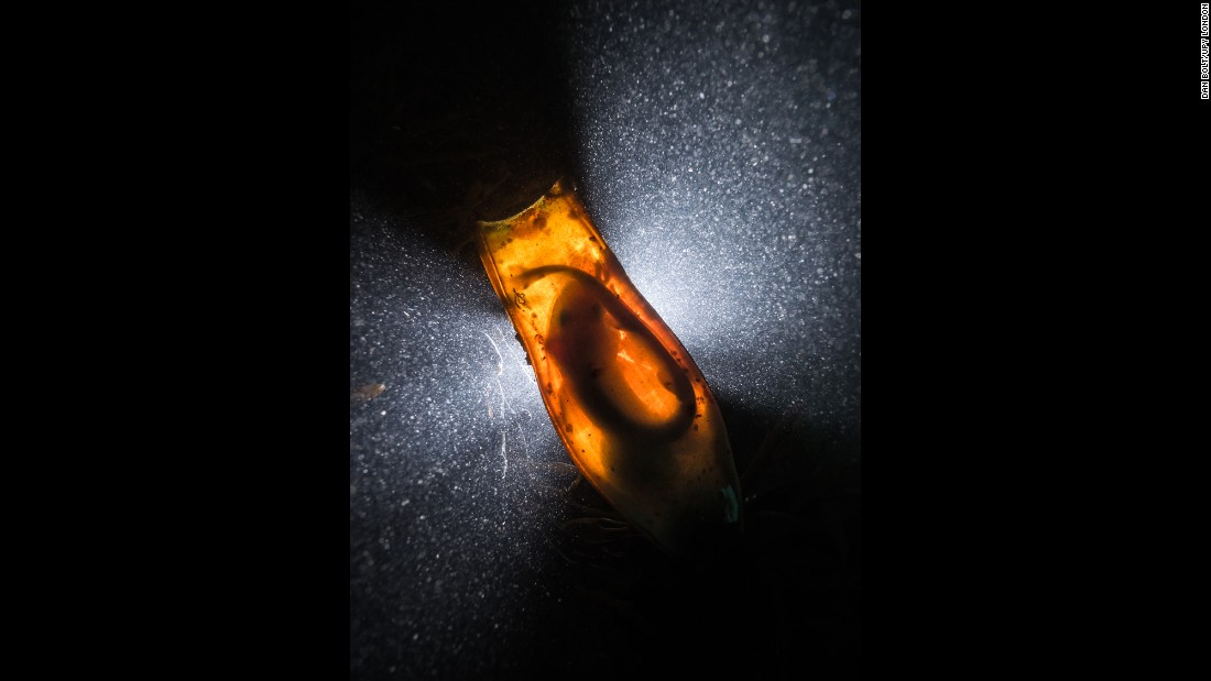 "Dan Bolt won British underwater photographer of the year for this image. ""Catshark Supernova"" is of a cat shark in its egg case."