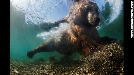 2016 Underwater Photographer of the Year winners