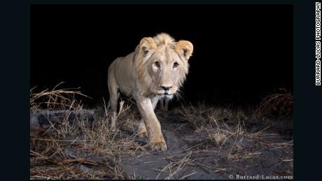 Meet the paparazzo of the animal kingdom