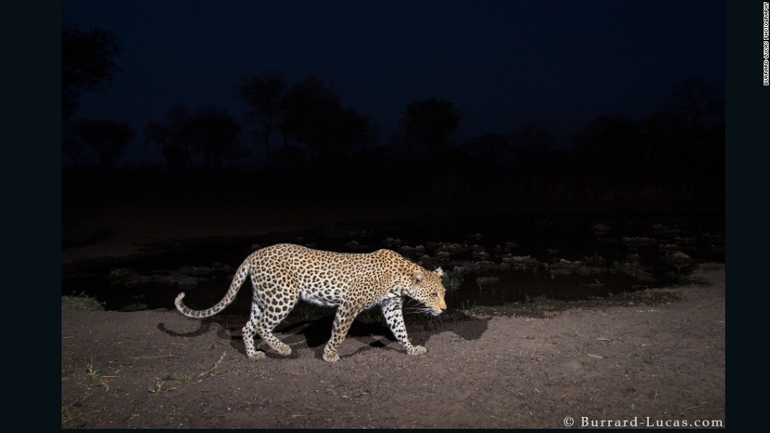 His assignment took place during the dry season, which meant that he could count on most animals wandering to the water hole to hydrate.