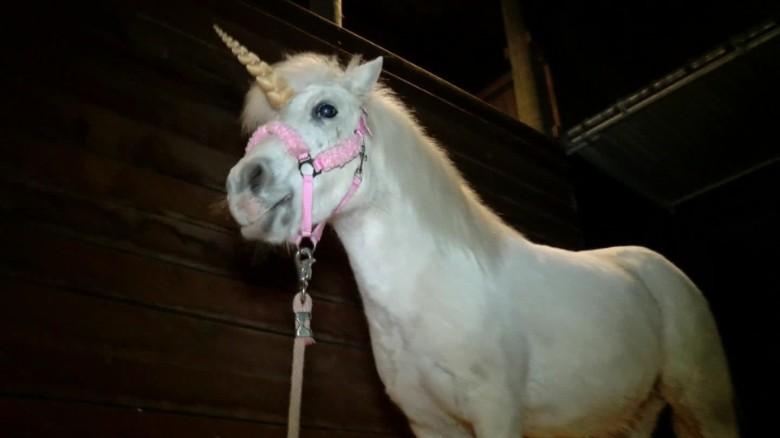 Real unicorn remains found  CNNcom