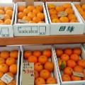 wakayama fruits