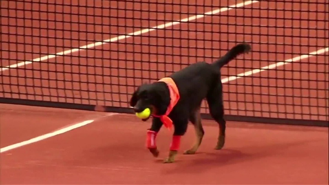 Ball dogs back at Brazil Open tennis tournament