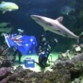 australia flag passports 01
