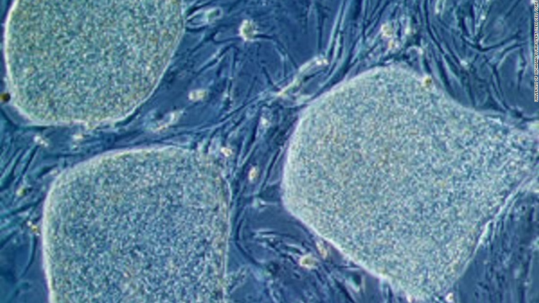 Stem cells offer the potential to be cultivated to become many other cell types in the body. Their ability to form cells within the eye could be key to reversing blindness. Pictured,  a colony of human embryonic stem cells under the microscope.