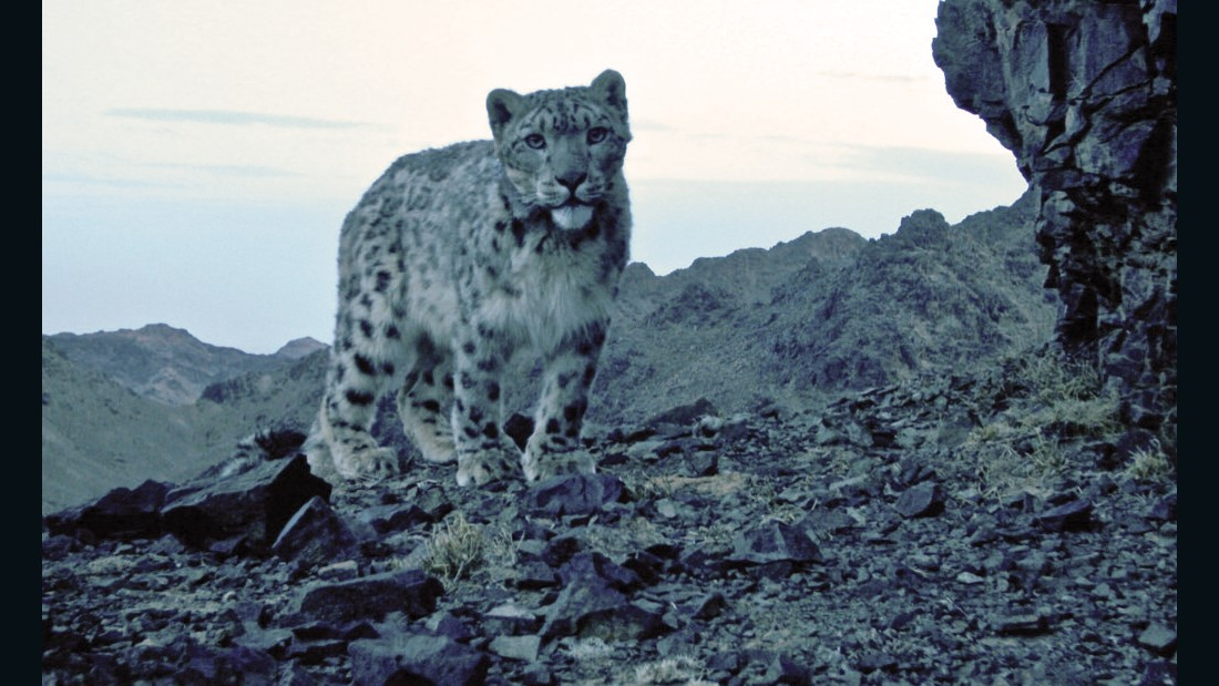 In South Gobi she came across scientists searching for the elusive snow leopard. They put infrared cameras in the mountains to capture image of the big cat.