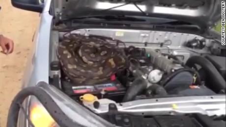 python in truck zimbabwe _00002314