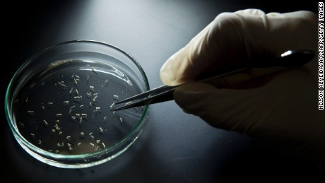 Peter Piot: Zika vaccine years away